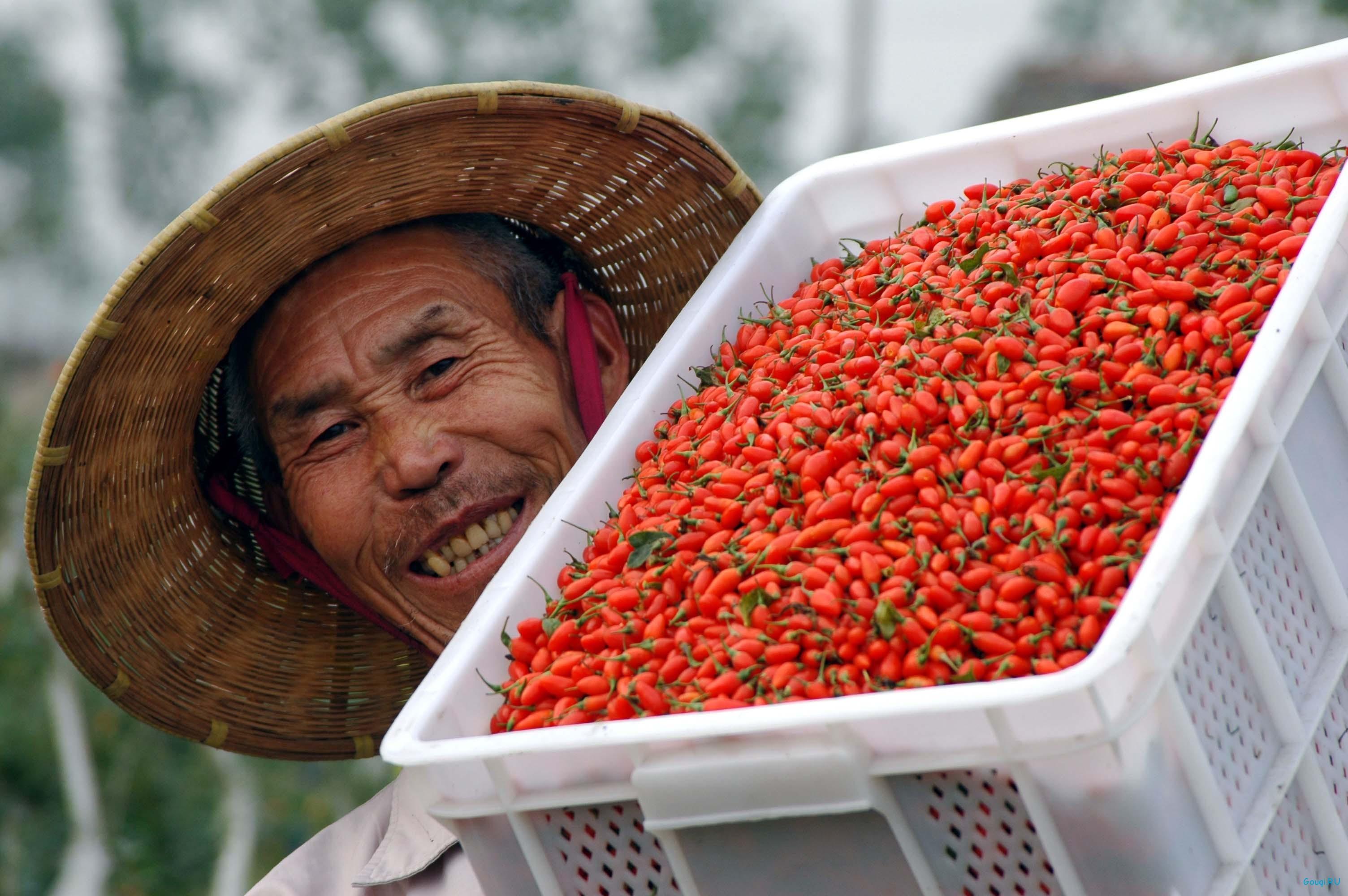 купить ягоды годжи в кривом роге